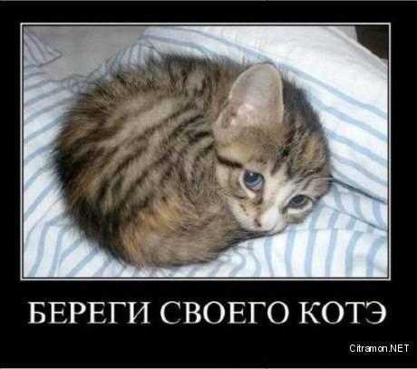 Береги своего коте!