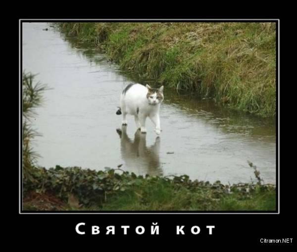Святой кот