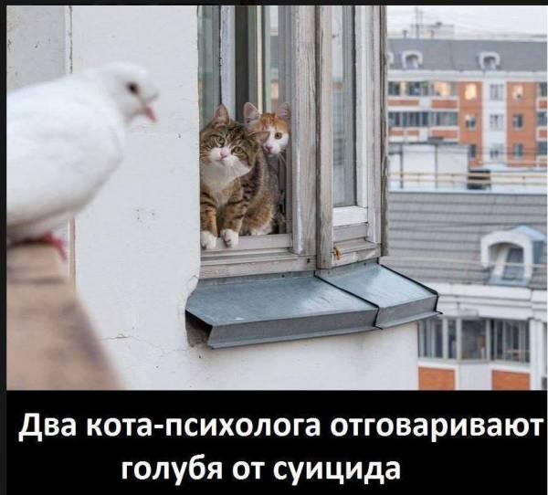 Коты психологи