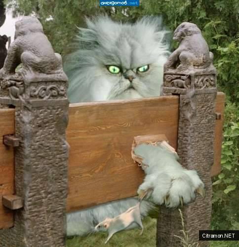 Кошак-демон