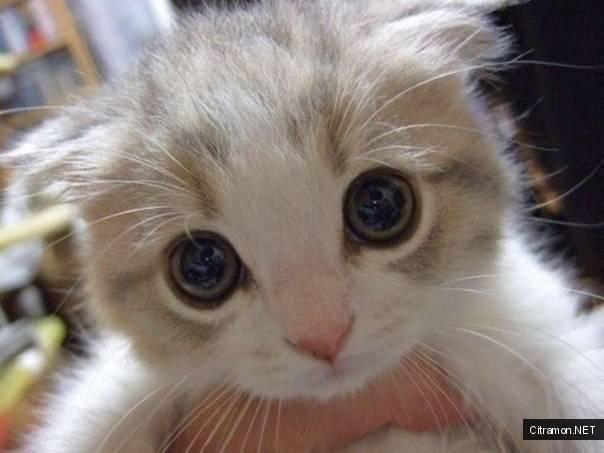 Фото милашек котов