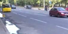 Как собачки переходили дорогу